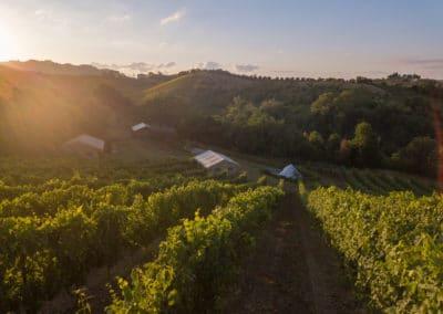 Kamperen bij de wijngaard