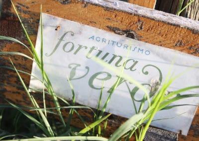 Fortuna Verde