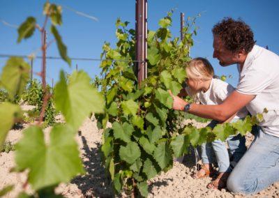 De wijngaard van Fortuna Verde
